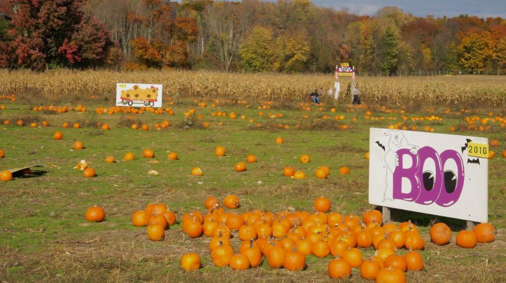 Heritage Farms Market pumpkin patch