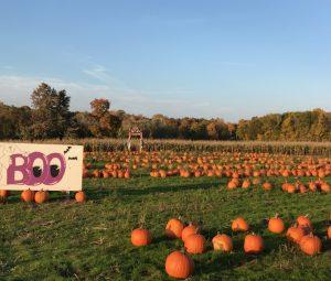 heritage farms pumpkin patch